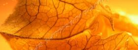 free dry leaf nature facebook cover