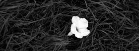free black and white flower facebook cover