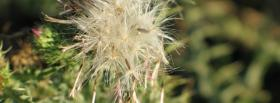 free lost flower nature facebook cover