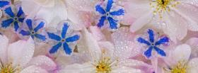 free blue white sparkly flowers facebook cover