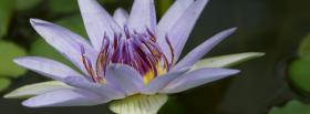 free nice white flower nature facebook cover