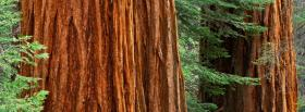 free big trunck nature facebook cover