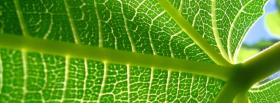 free details of leaf nature facebook cover