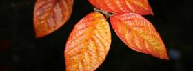 free four orange leaves nature facebook cover