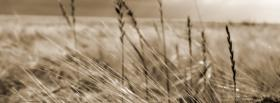 free crops nature facebook cover