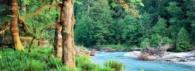 free bright rainforest nature facebook cover
