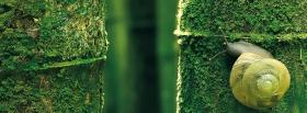 free forest snail nature facebook cover