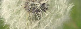 free dandelion nature facebook cover