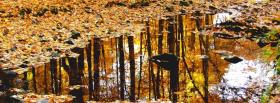 free autumn leaves and rain facebook cover