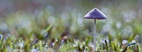 free cute mushroom nature facebook cover