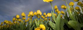 free garden tulips nature facebook cover