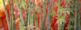 free bamboos nature facebook cover