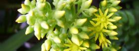 free green flowers nature facebook cover