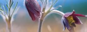 free beautiful flowers nature facebook cover