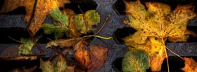free leaves on ground nature facebook cover