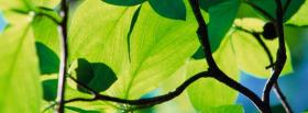 free branches and leaves nature facebook cover