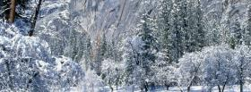 free icy forest nature facebook cover