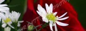 free nice white flowers nature facebook cover