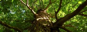 free large tree nature facebook cover