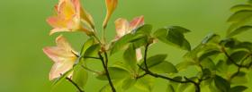 free bloomed flowers nature facebook cover