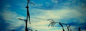 free broken dried plants nature facebook cover