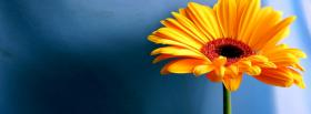 free flower on blue nature facebook cover
