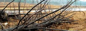 free collapsed tree nature facebook cover