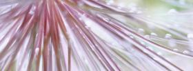 free breath taking nature facebook cover