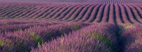 free landscape of flowers nature facebook cover