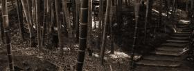 free bamboo trail nature facebook cover
