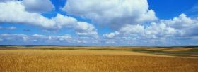 free golden fiel nature facebook cover