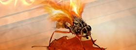 free fly on fire nature facebook cover