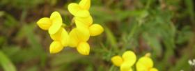 free cute lil flowers nature facebook cover