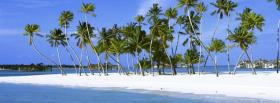 free beach of palm trees facebook cover