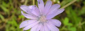 free light purple flower nature facebook cover
