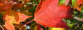 free dried leaves nature facebook cover