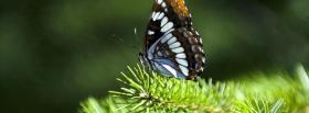 free butterfly and greens nature facebook cover