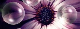 free bubbles and flower nature facebook cover