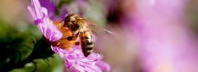 free bee in flower nature facebook cover
