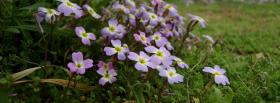 free cute light purple flowers facebook cover