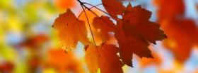 free little fall leaves nature facebook cover