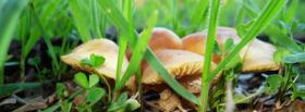 free mushrooms and grass nature facebook cover