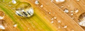 free autumn yellow leaf nature facebook cover
