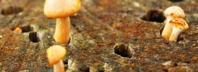 free mushrooms nature facebook cover