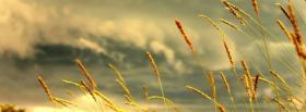 free gloomy sky wheat nature facebook cover