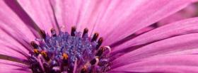 free close up purple flower facebook cover
