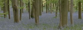 free flowers and trees nature facebook cover