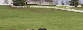 free animal farm nature facebook cover