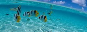 free fishes and clear water nature facebook cover