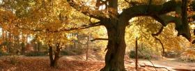 free gold leaves nature facebook cover